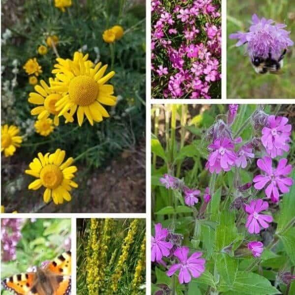 Perhosniitty siemenseos lajitelma luonnonkukkia. Kotimaiset siemenet täältä!
